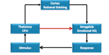 How amygdala hijacks happen in the brain
